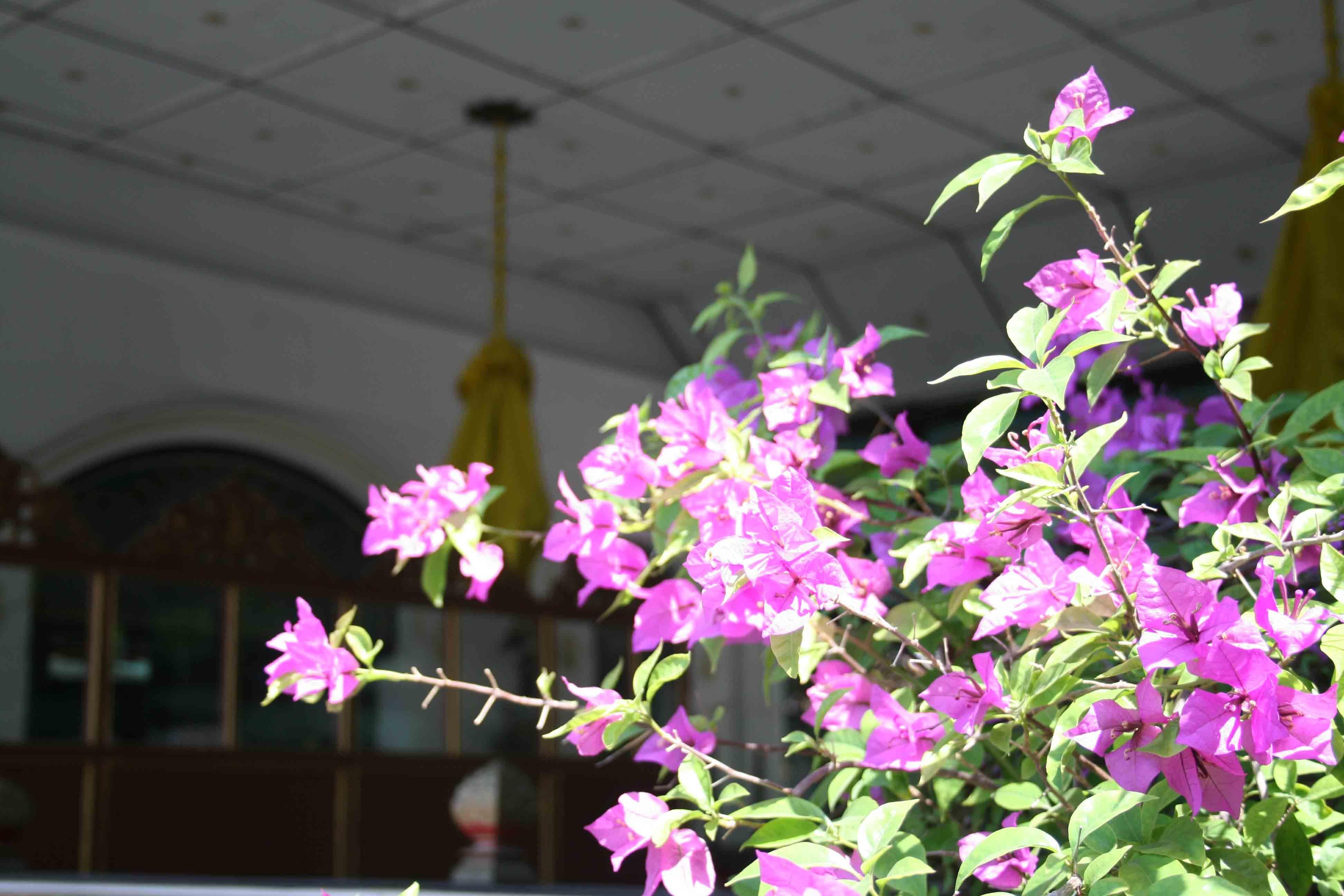 Fleur dans le Kraton