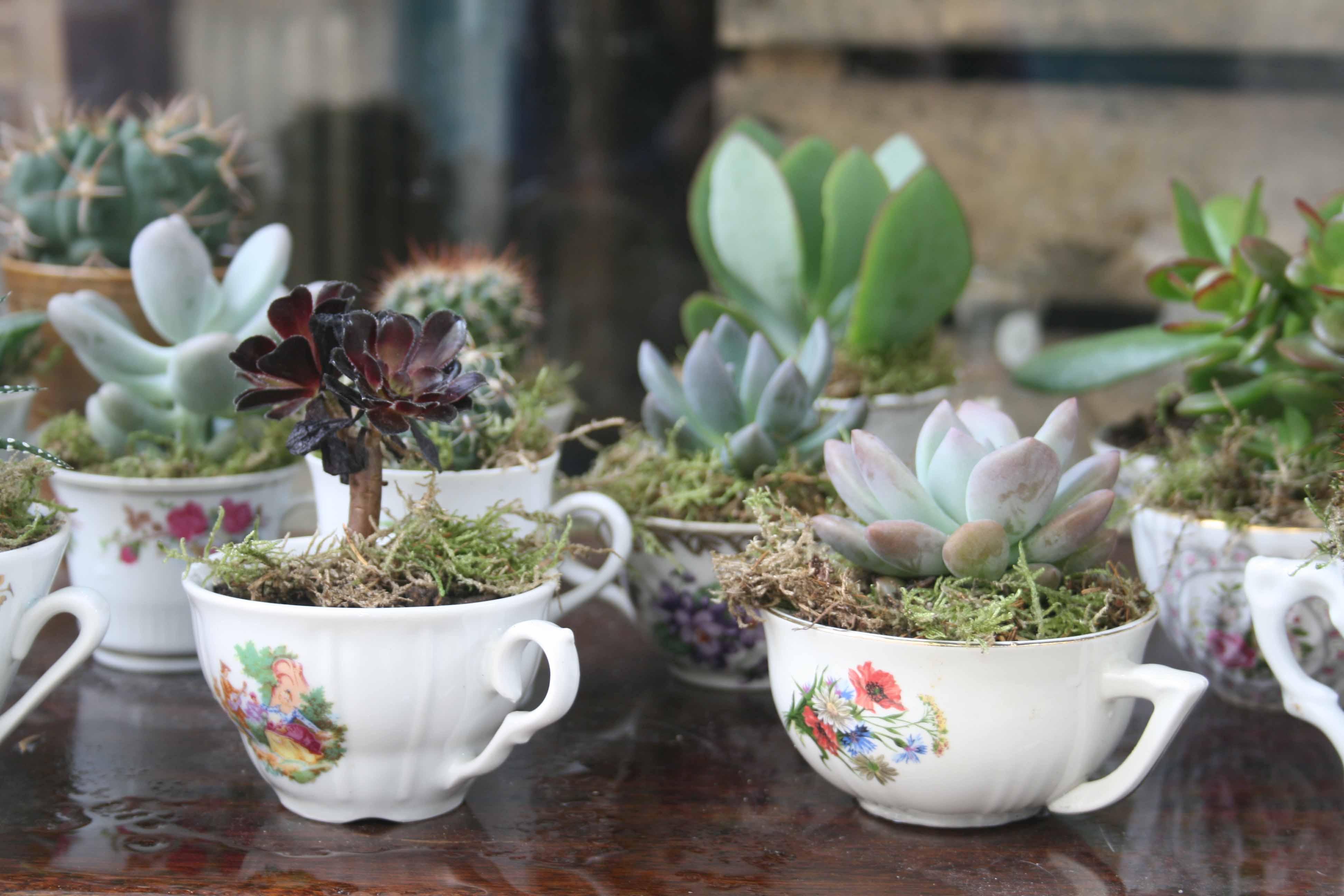 Succulentes entassées