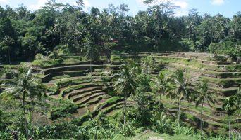 Ubud – Bali ♥ Indonesia 4