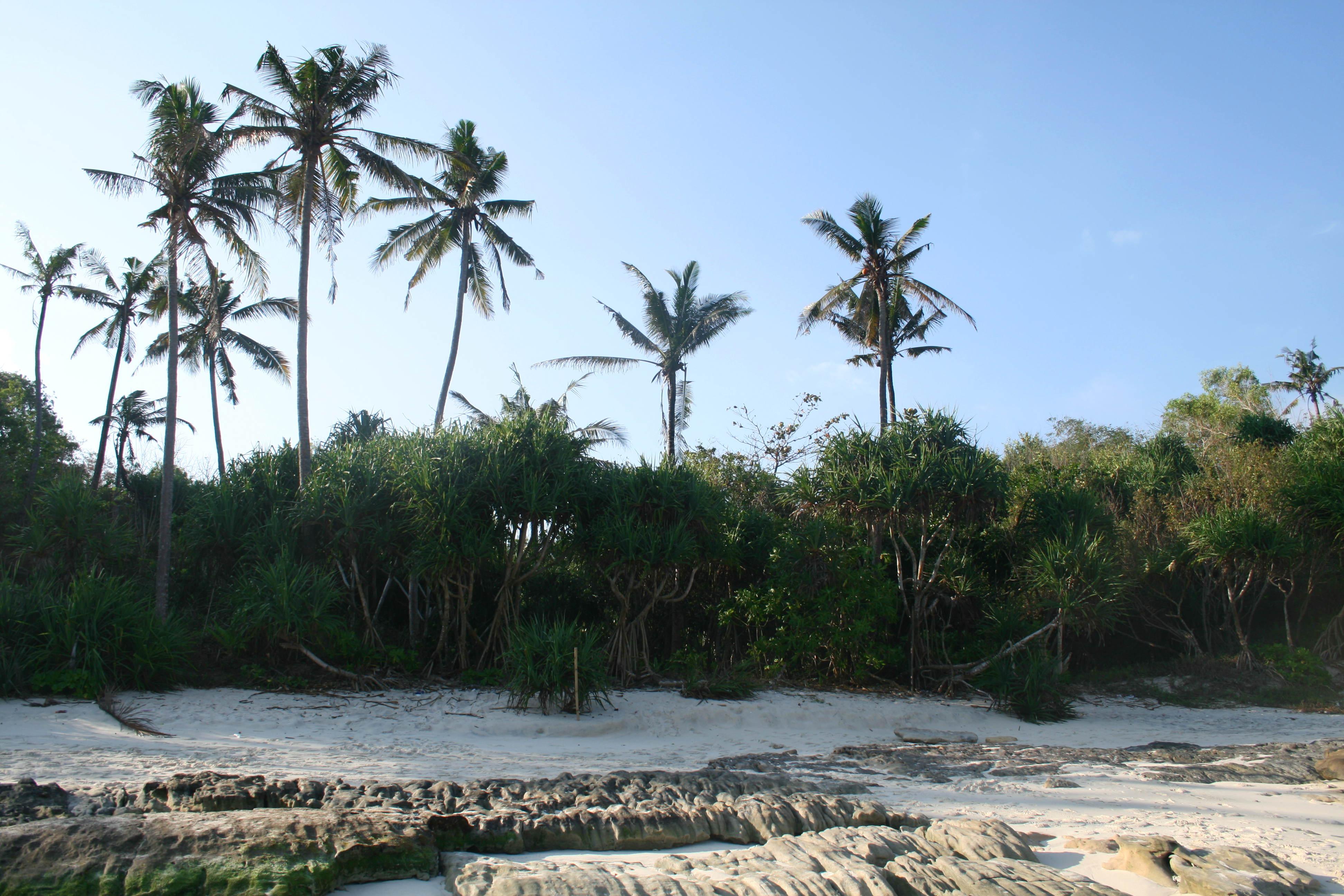 Les palmiers sur la plage