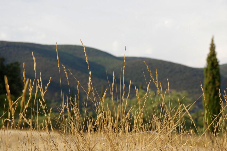 AOC Luberon