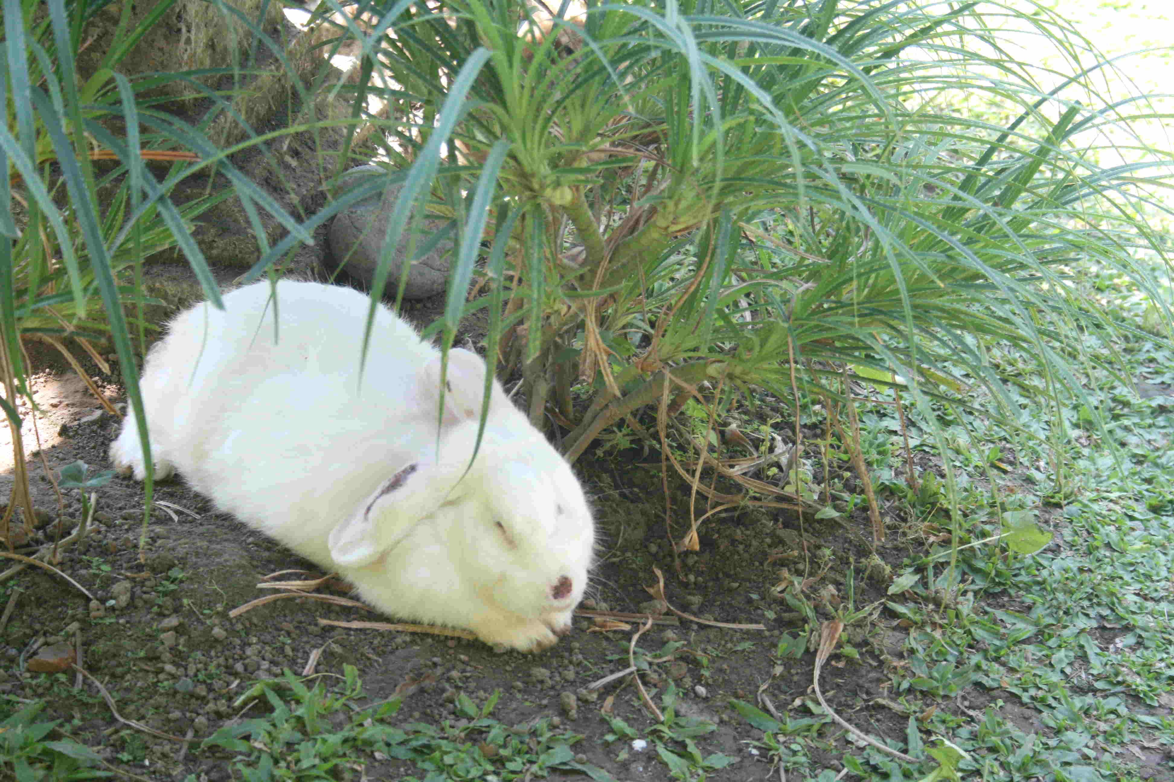 Rabbit in Ubud restaurant