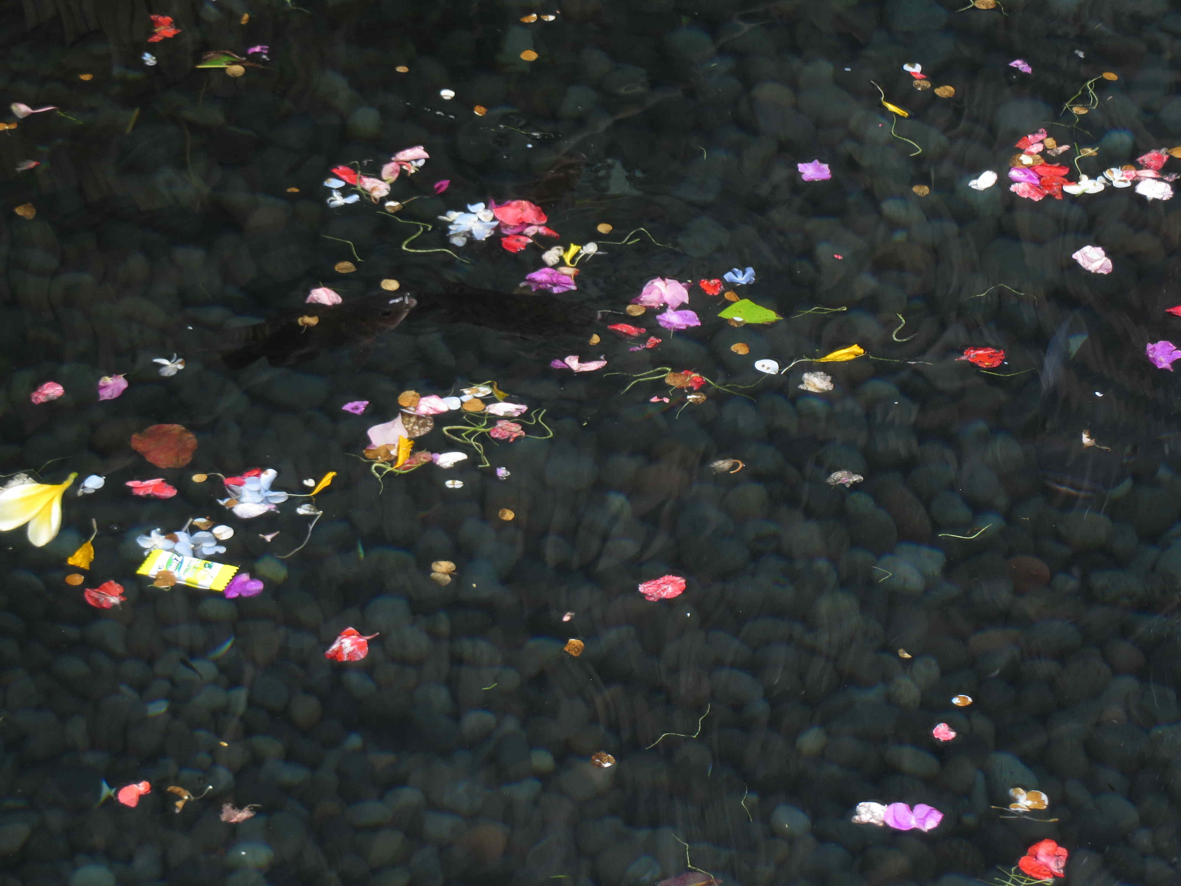Flowers in the water