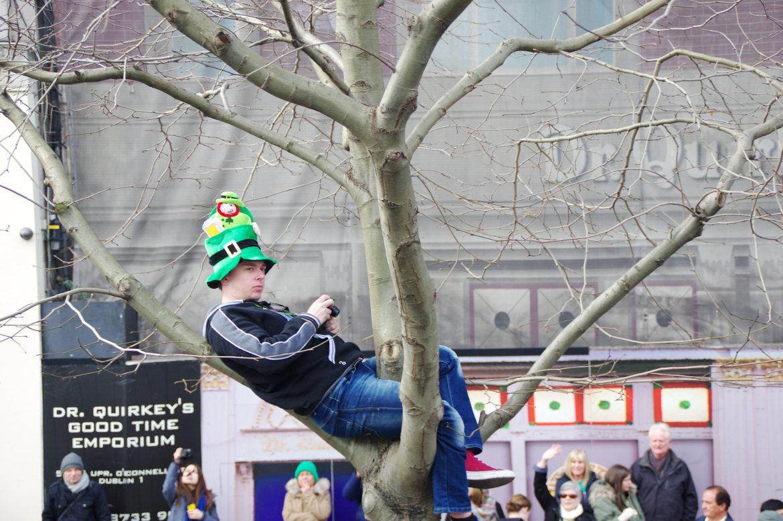 SAd an in a tree
