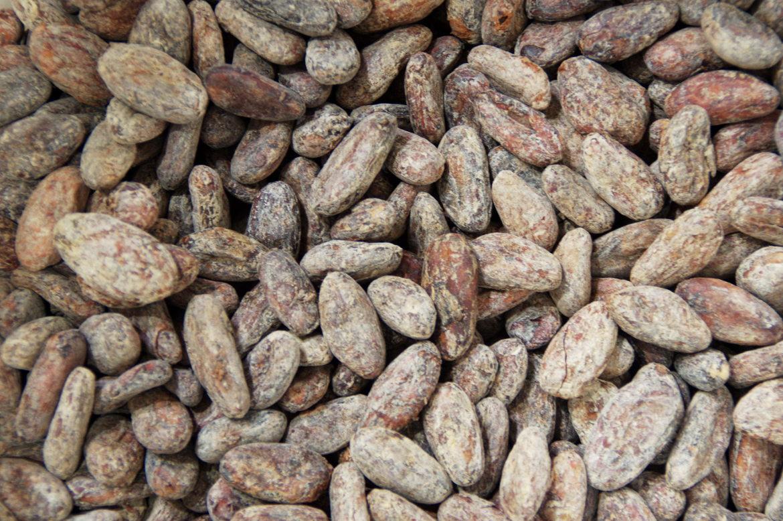 feve de cacao
