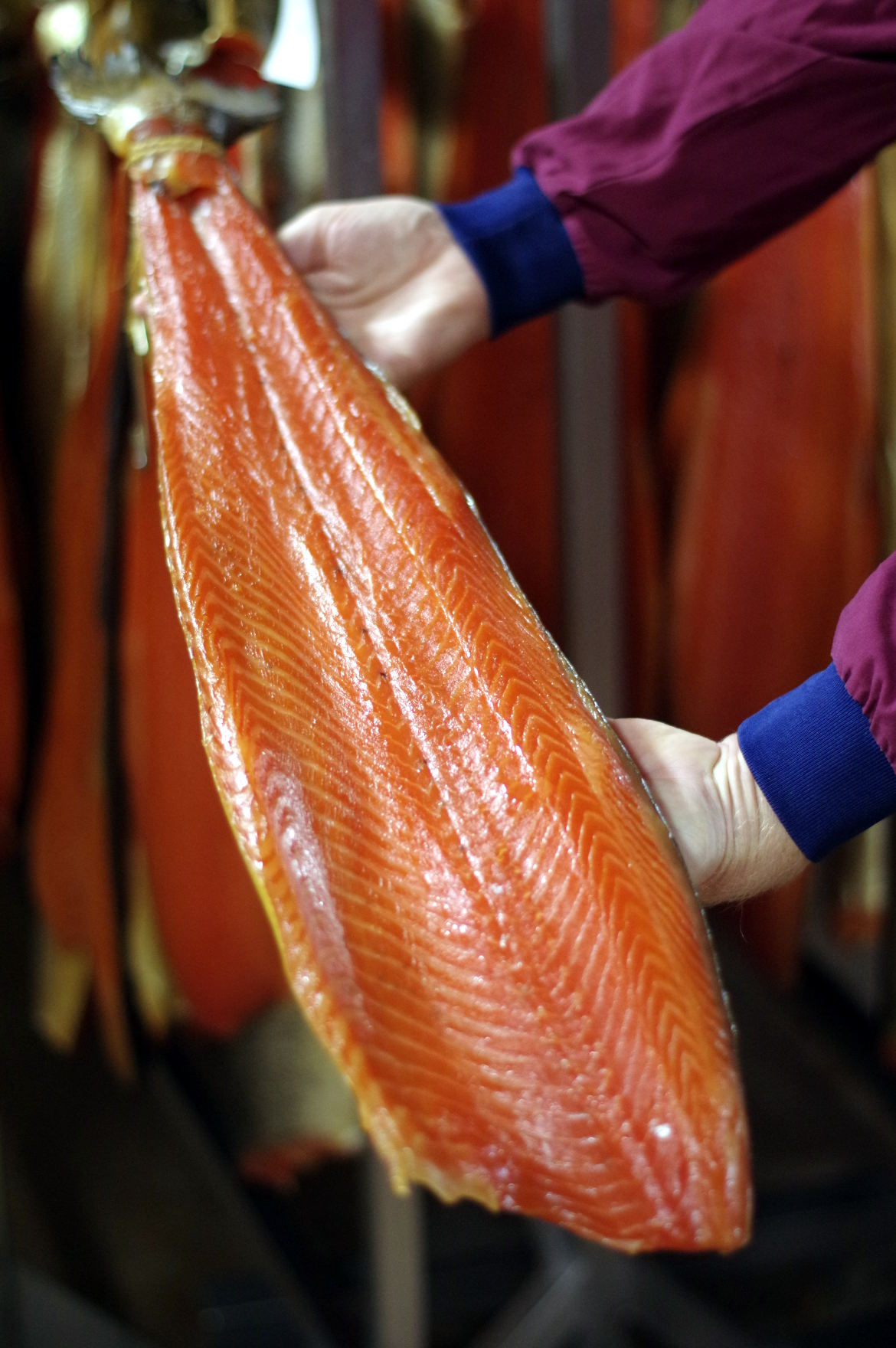 Polar salmon